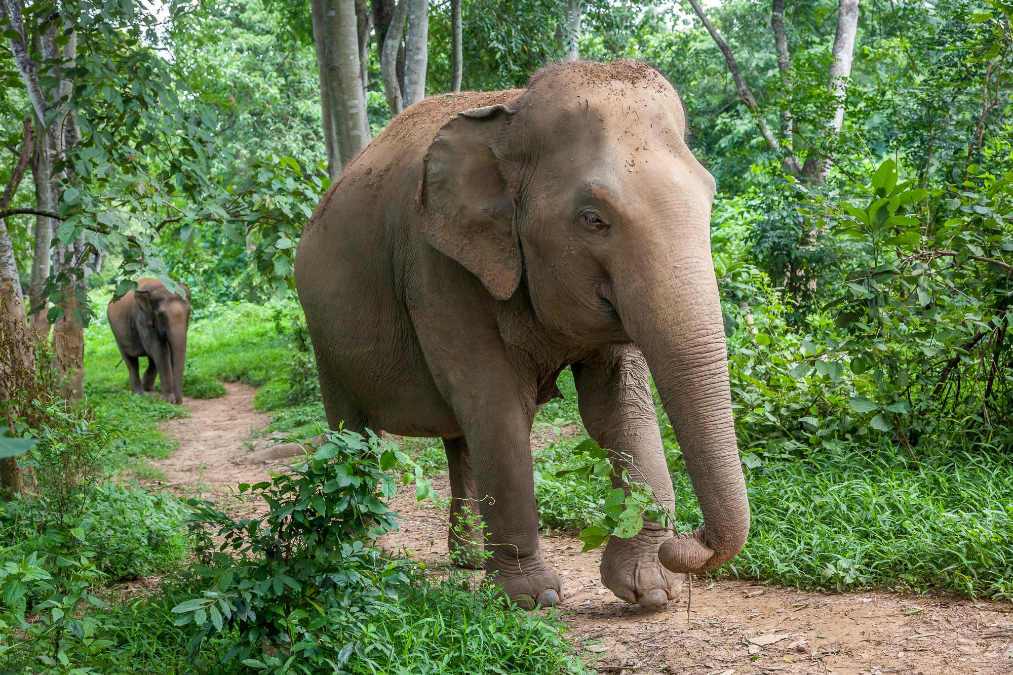 """Warsztaty o zwierzętach """"Dziki zwierz"""" - słoń"""